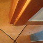 Ameisenbefall im Bad (Türe Bad/Zimmer)