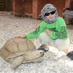 привет большая черепаха