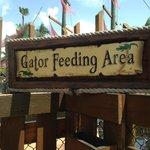Gator Feeding area