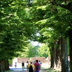 strolling the tree-lined walls
