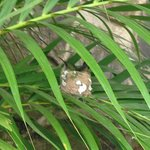 Hummingbird nesting in hotel grounds