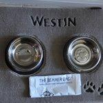 Westin Dog bowls