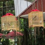 Traditional bird cages with birds