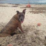 spiaggia  per cani tiliguerta