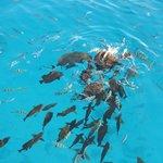 Рыбки около строва Малый Гифтун