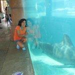 Una foto con el tiburoncito