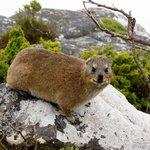 animal at Table Mountain