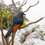 Bird at Table Mountain
