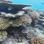 island reefs