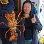 Freshly caught crayfish