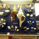 collezione di conchiglie