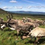 Reindeer Hill Visit