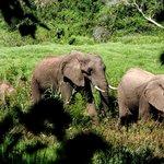Elephants on game drive
