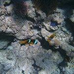 Рыбки клоуны на рифе отеля