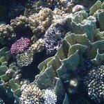 Красота рифа
