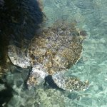 Criadero de tortugas