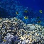 Риф с обилием рыбок
