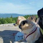 Dogs enjoying their stay