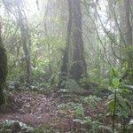 Cerro Chato Trail mid way