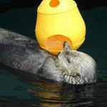 La lontra e il ghiaccio