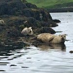 Dunvegan Seal Colony