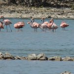 90 minutes away flamingo; very hard to spot