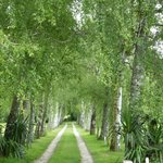 The tree lined driveway