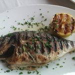 Royal Dorado Fish - Delicious