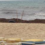 The sunbeds match the beach!