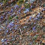 Fiori nella passeggiata del giro del lago