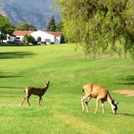 View of Deer while on Golf Course