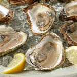 Delicious oysters.