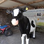 Have a go at milking the cow