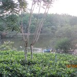 tea garden by the lake
