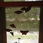 Monarchs at the window