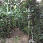 Beautiful rainforest walks