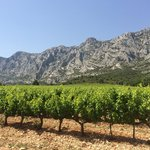 Gorgeous Sainte-Victoire mountains that Cezanne loved to paint behind this gorgeous vineyard