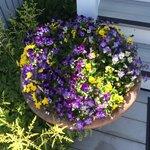 Beautiful flowers everywhere!