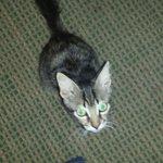 Bert the cat! Make sure to buy him a treat!