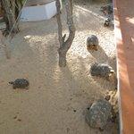 The Turtle's Nest