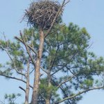 Largest nest we've ever seen!