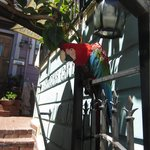 Teko the parrot that greets you at the front door.