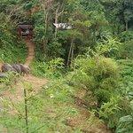 Слоники кушают ботву от ананасов