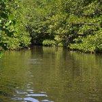熱帶紅樹林2