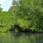 熱帶紅樹林3