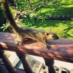 Squirrel :D
