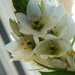 Pretty little fresh-cut tabletop flowers