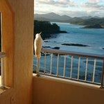 Burung bersantai di balkon