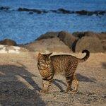Molo przy plaży roi się od kotów
