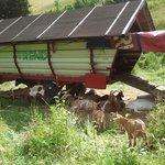 Een geitencamper vlakbij hotel ☺